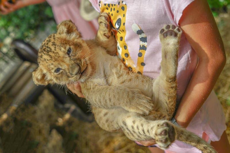 Menina que guarda um gatinho do leopardo um jardim zoológico, uma criança de um predador feroz nos braços de uma criança humana imagem de stock royalty free