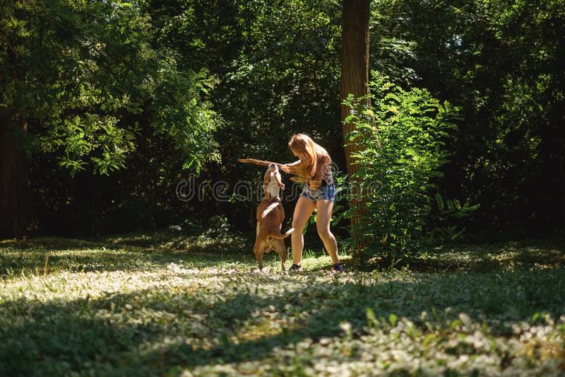 Menina que guarda um ramo para seu cão quando morder imagem de stock