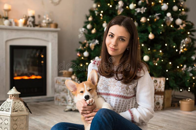 Menina que joga com o casaco de lã do Corgi de Galês do cachorrinho no fundo da árvore e da chaminé de Natal imagem de stock