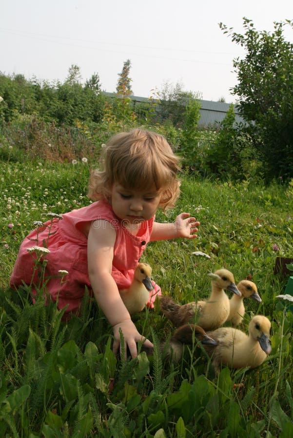 Menina que joga com patos do bebê foto de stock royalty free
