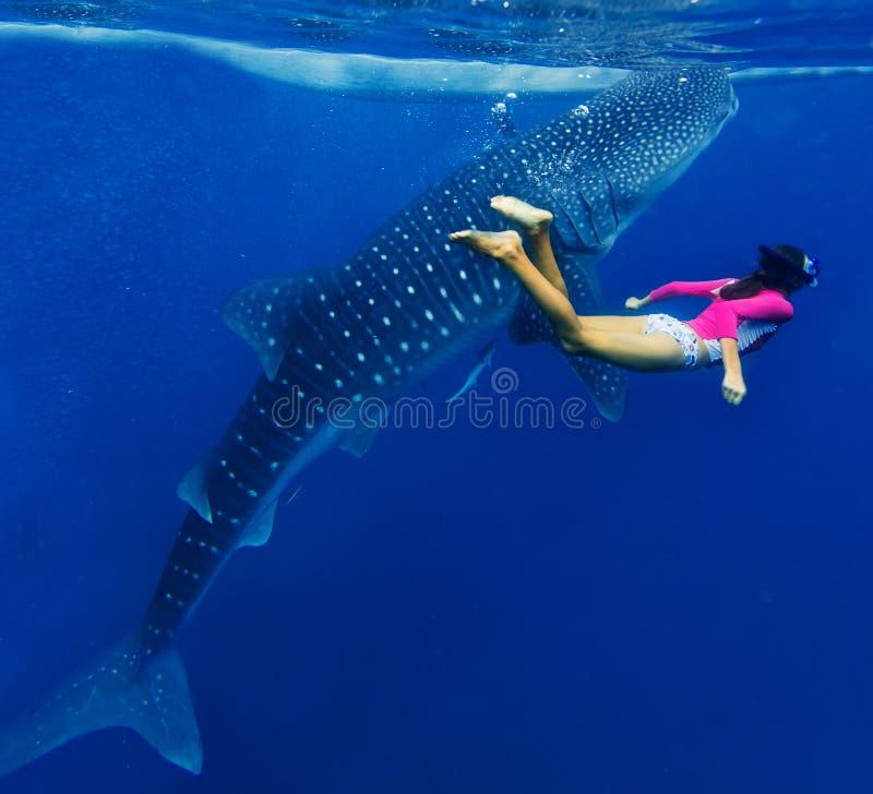 Menina que mergulha com tubarão de baleia fotografia de stock royalty free