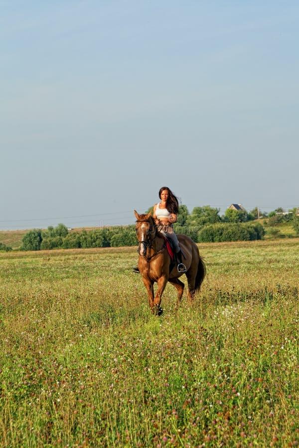Download Menina que monta um cavalo imagem de stock. Imagem de cavalo - 26507091