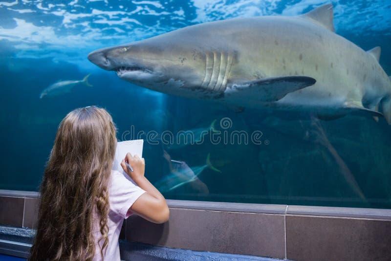 Menina que olha o aquário imagem de stock royalty free