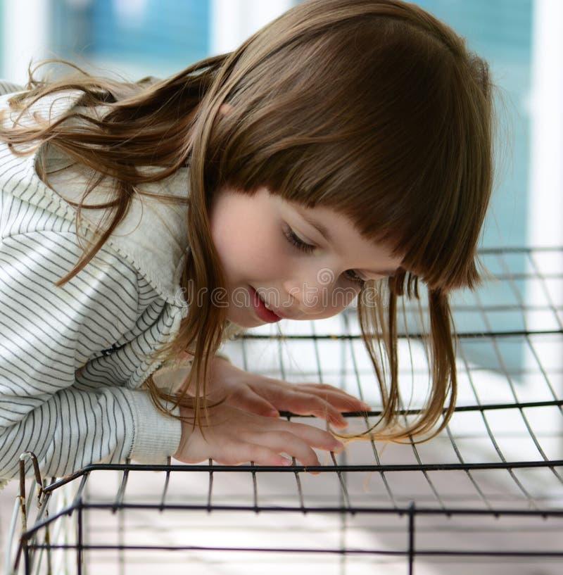 Menina que olha um coelho em uma gaiola foto de stock