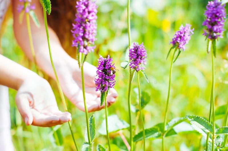 menina que olha uma abelha polinizar flores selvagens em um campo imagens de stock royalty free