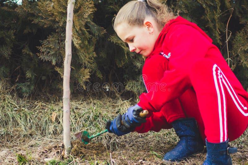 A menina que planta a ?rvore de am?ndoa em um jardim, usa uma ferramenta da manuten??o de planta Trabalho no jardim imagem de stock royalty free