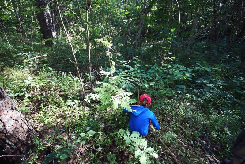 Menina que recolhe cogumelos em uma floresta fotos de stock royalty free