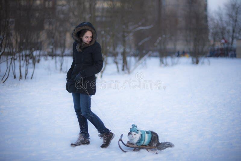 Menina que sledding um gato imagens de stock