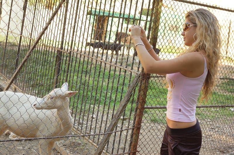 Menina que toma fotos no jardim zoológico foto de stock