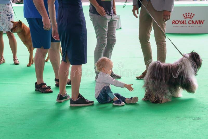 A menina quer jogar com um cão na exposição de cães dentro Am do mundo imagens de stock royalty free