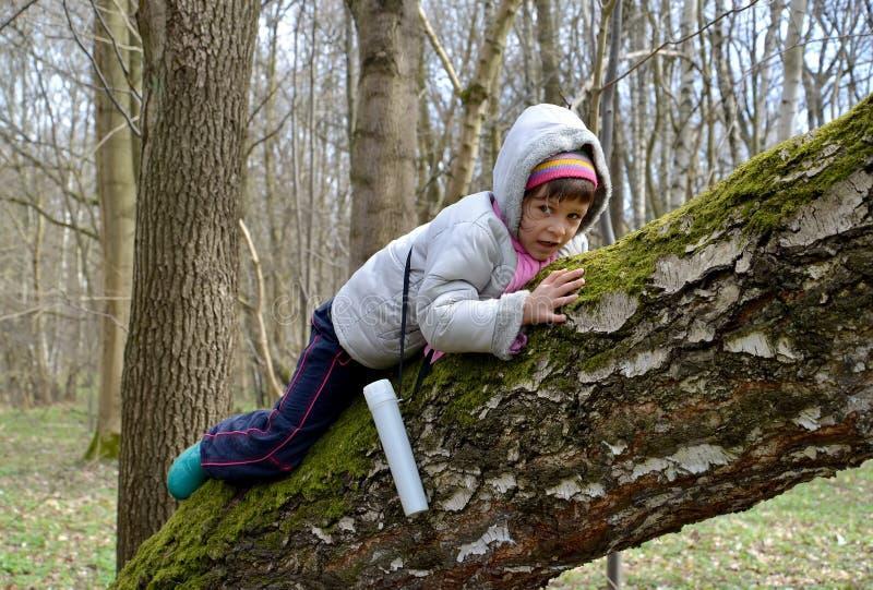 A menina rasteja em um tronco de uma árvore grande na primavera wo fotografia de stock royalty free