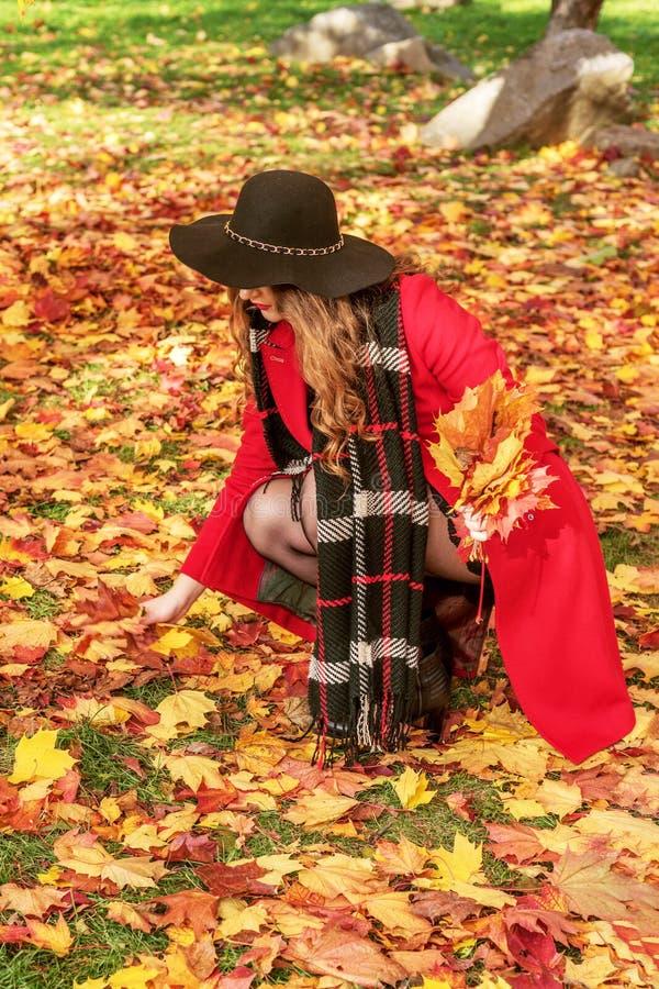 A menina recolhe as folhas de outono caídas amarelo em um revestimento vermelho e o chapéu negro escondeu sua cara fotos de stock