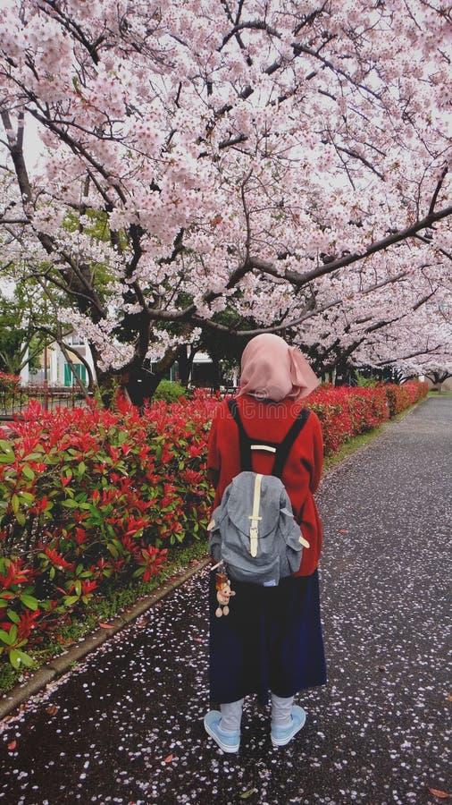 Menina sob árvores de sakura fotos de stock royalty free