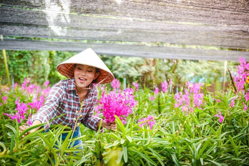 Menina vietnamiana que faz o cultivo da flor da orquídea fotos de stock