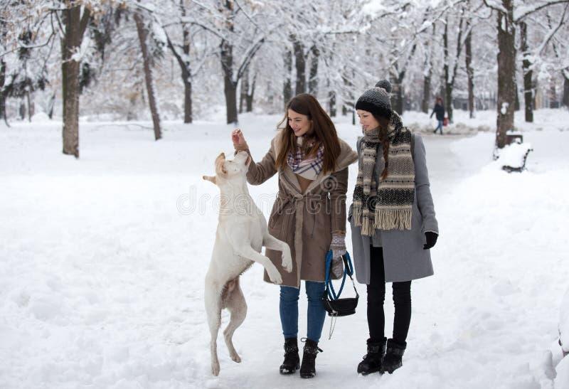 Meninas com o cão na neve imagens de stock royalty free