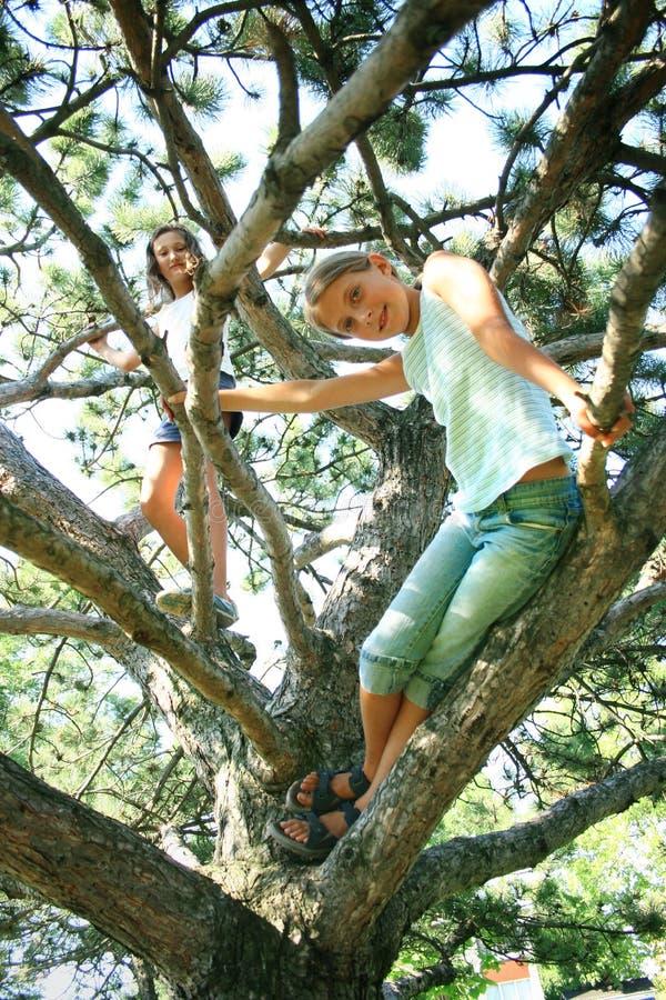 Meninas nos membros de árvore fotos de stock royalty free