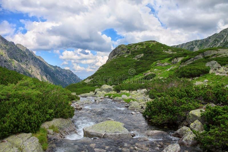 Mening aan bergrivier, groene pijnboombomen en rotsachtige pieken royalty-vrije stock foto