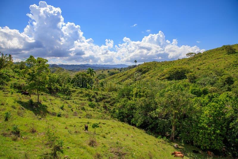 Mening aan de wildernis in de bergen van Puerto Plata, Dominicaans R stock afbeelding