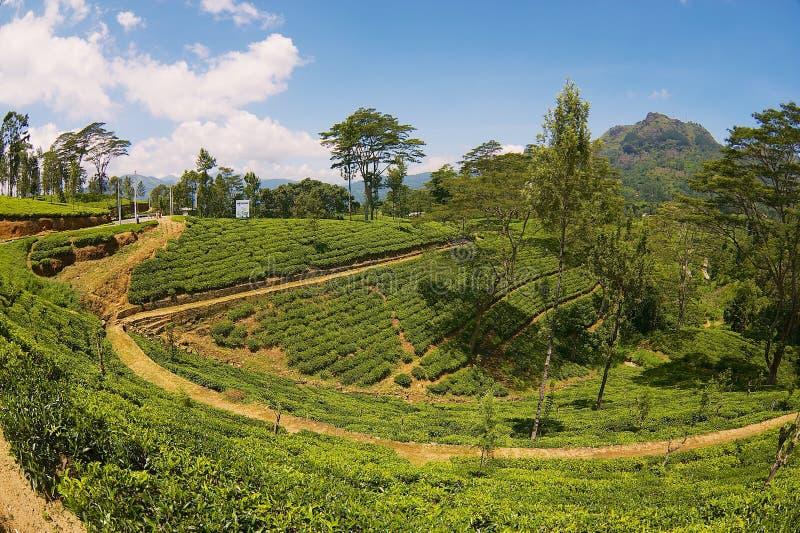 Mening aan het platteland met mooie landschap en theeaanplantingen in Nuwara Eliya, Sri Lanka stock foto
