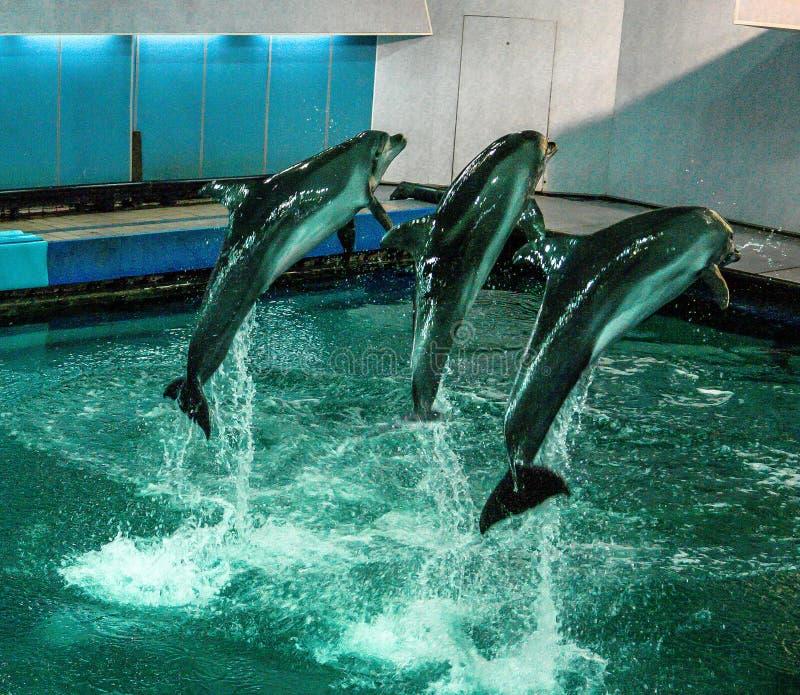 Mening aan oud Moskou Dolphinarium royalty-vrije stock afbeelding