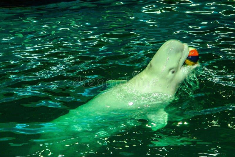 Mening aan oud Moskou Dolphinarium stock afbeelding