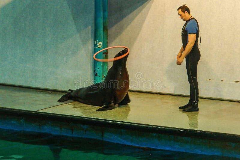 Mening aan oud Moskou Dolphinarium royalty-vrije stock foto