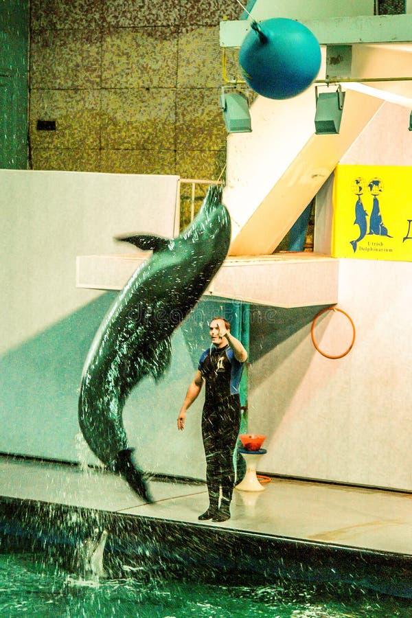 Mening aan oud Moskou Dolphinarium stock foto