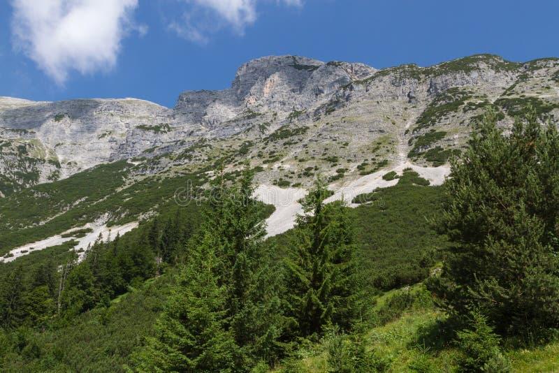 Mening bij de Honden Hoofdberg Oostenrijk, Tirol stock afbeelding