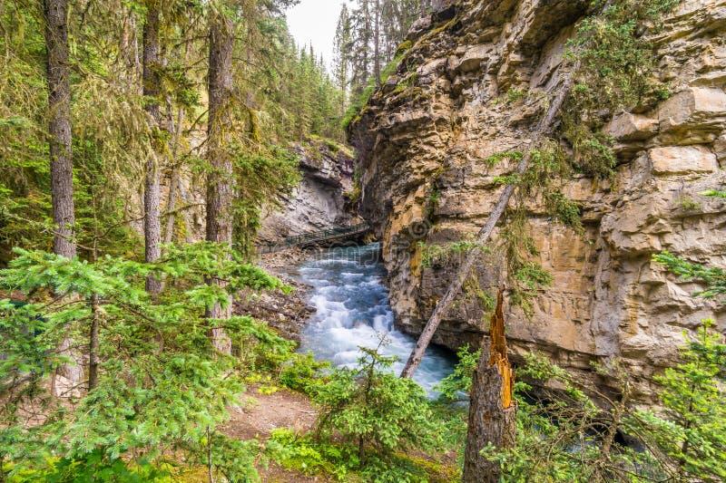 Mening bij de Johnston-kreek in Johnston Canyon van het Nationale Park van Banff - Canada stock afbeeldingen