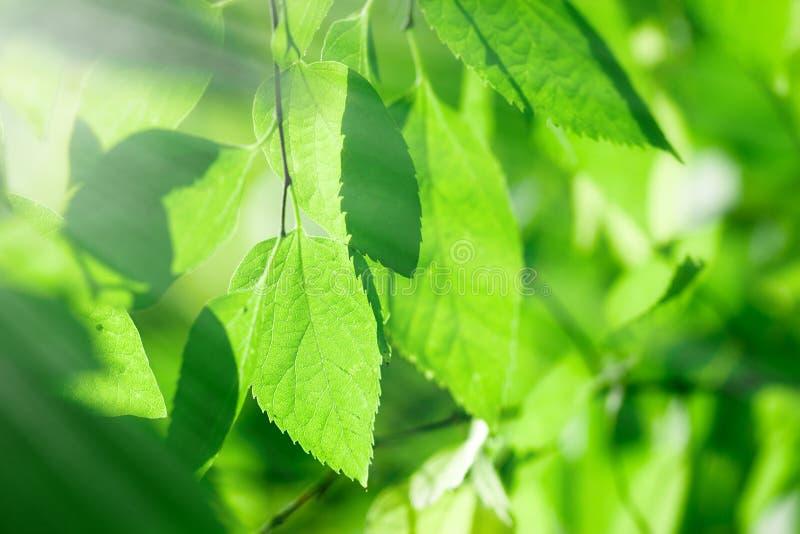 Mening door de bladeren (kronen van de bomen) stock afbeelding