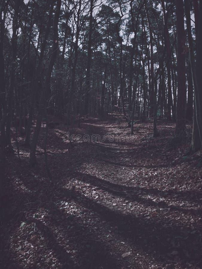 Mening in het donkere bos royalty-vrije stock fotografie
