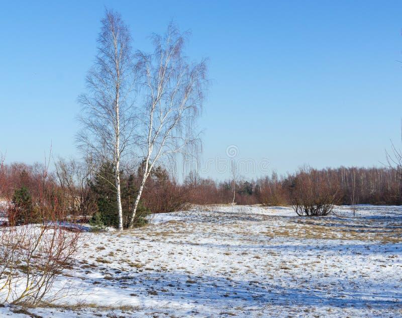 Mening ofdunes in de winter royalty-vrije stock afbeeldingen