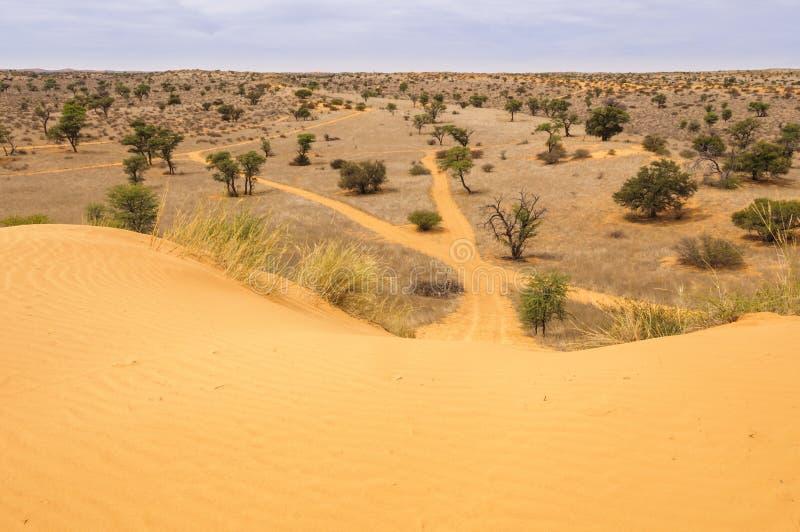 Mening onderaan een zandduin in de Kalahari royalty-vrije stock foto's