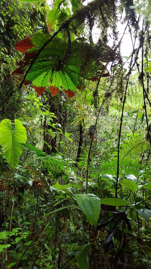 Mening op korte termijn van het meest cloudforest stock fotografie