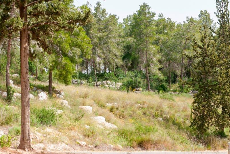 Mening over bijbels landschap Hadid stock foto's