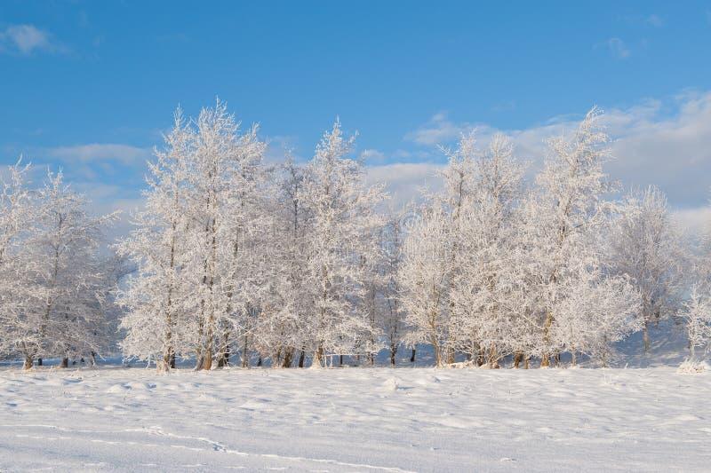 Mening over de de winterbomen stock afbeelding