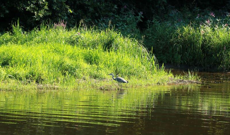 Mening over de rivier Semois, Belgische Ardennen royalty-vrije stock foto