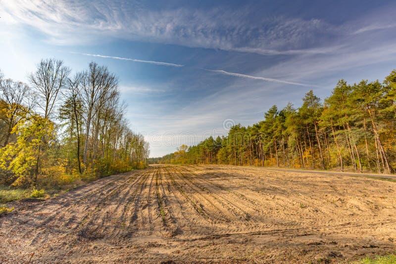 Mening over de verminderde bomen in het bos royalty-vrije stock foto's