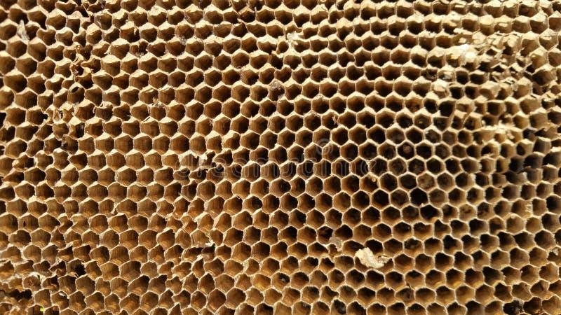 Mening over een honingraat, close-up stock afbeelding