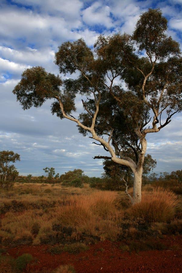 Mening over Pilbara, Australië royalty-vrije stock foto