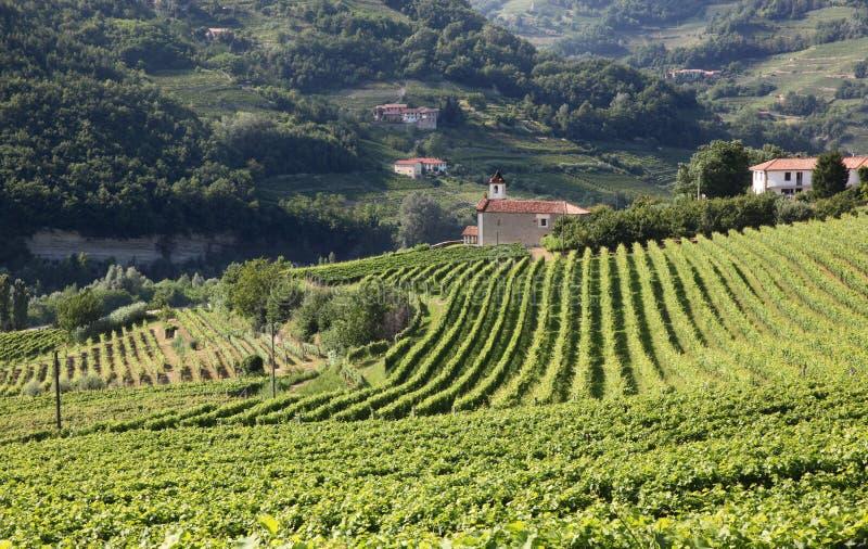Mening over wijnstokken naar een kerk in Piemonte, Italië stock afbeeldingen