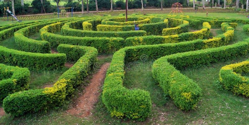 Mening som studsar trädgårds- labyrint royaltyfri fotografi