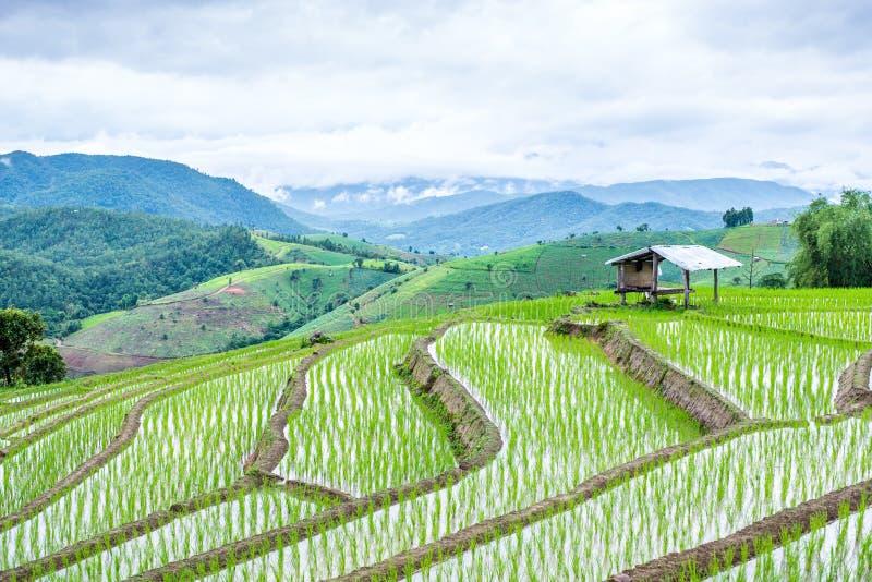 Mening Terrasvormig Paddy Field in mae-Jam Dorp, Chaingmai stock foto
