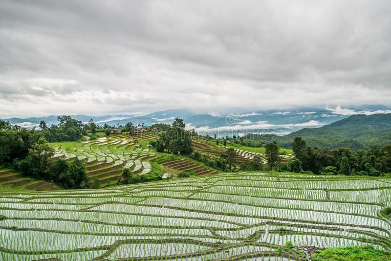 Mening Terrasvormig Paddy Field in mae-Jam Dorp, Chaingmai royalty-vrije stock foto's