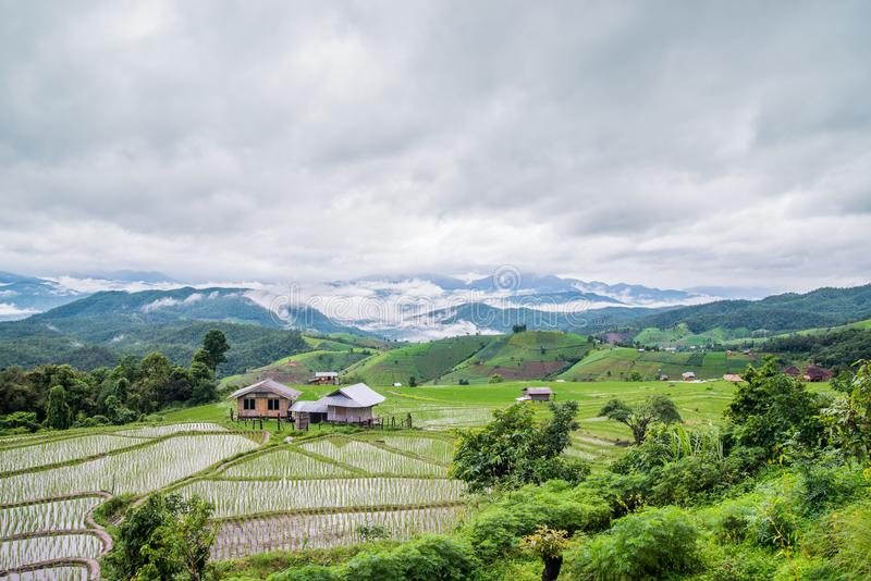 Mening Terrasvormig Paddy Field in mae-Jam Dorp, Chaingmai stock fotografie