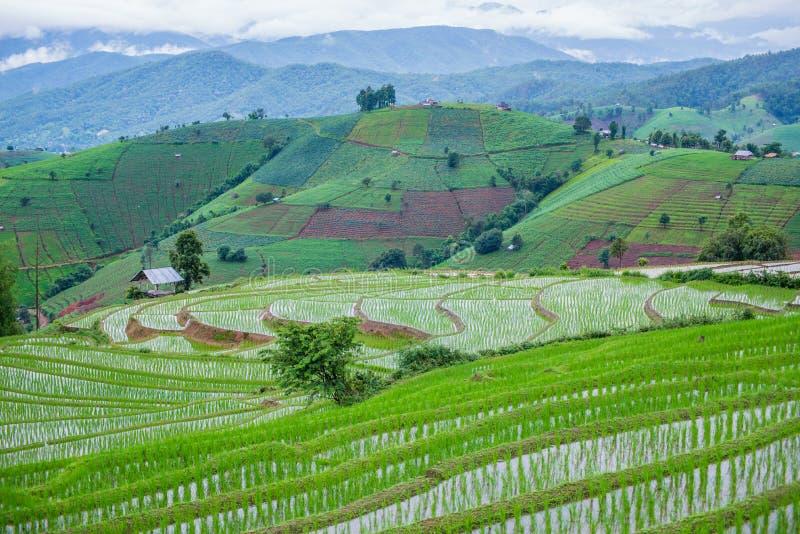 Mening Terrasvormig Paddy Field in mae-Jam Dorp, Chaingmai stock foto's