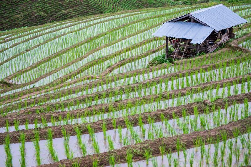 Mening Terrasvormig Paddy Field in mae-Jam Dorp, Chaingmai royalty-vrije stock fotografie