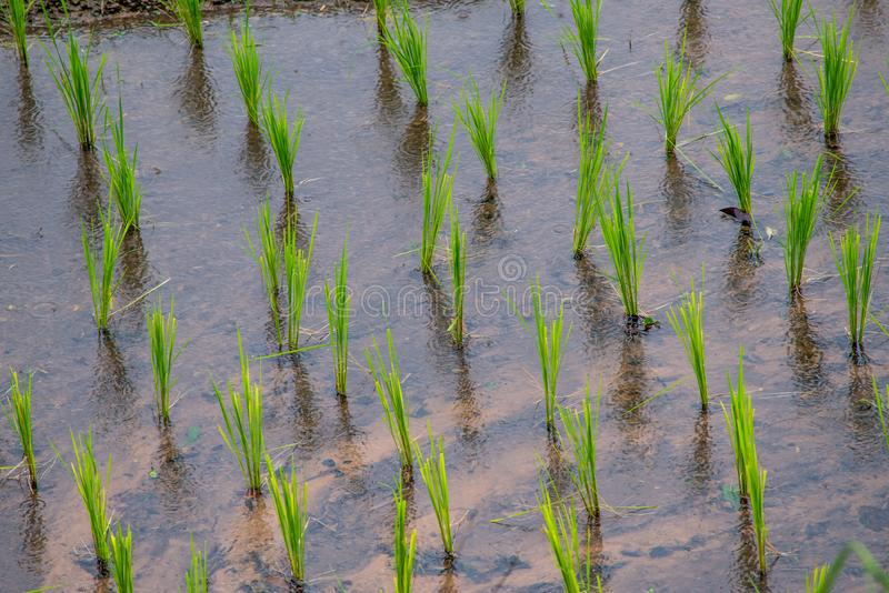 Mening Terrasvormig Paddy Field in mae-Jam Dorp, Chaingmai royalty-vrije stock afbeeldingen