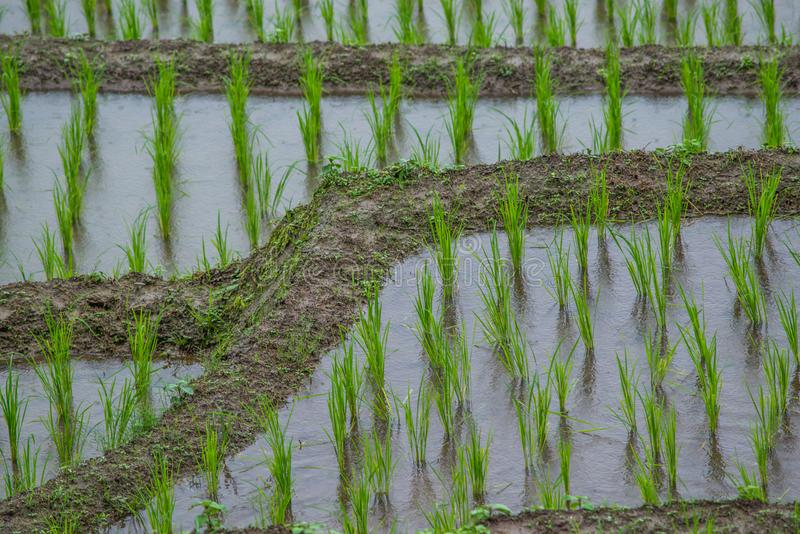 Mening Terrasvormig Paddy Field in mae-Jam Dorp, Chaingmai stock afbeelding