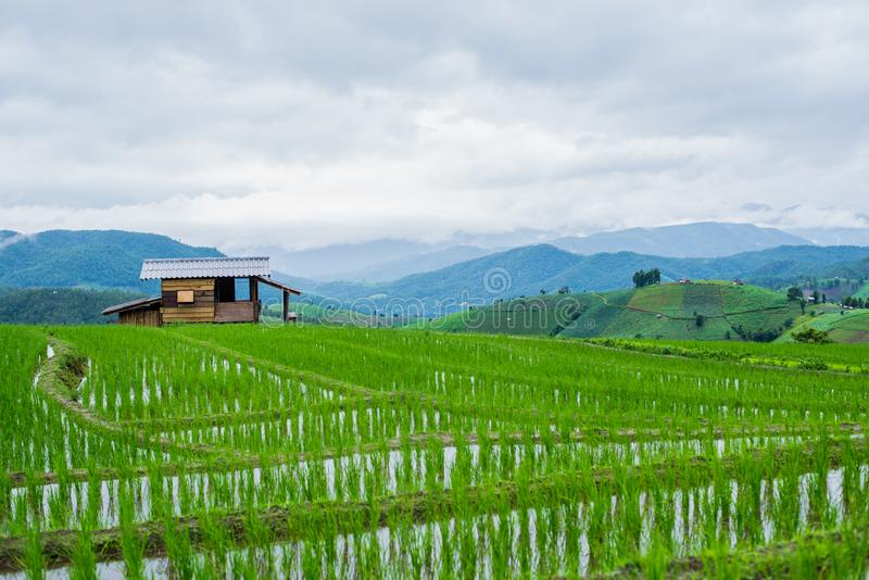 Mening Terrasvormig Paddy Field in mae-Jam Dorp, Chaingmai royalty-vrije stock afbeelding